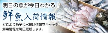 明日の魚が今日わかる!鮮魚入荷情報